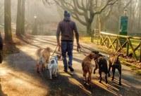 Dog sitter gratuito per chi si trova in quarantena